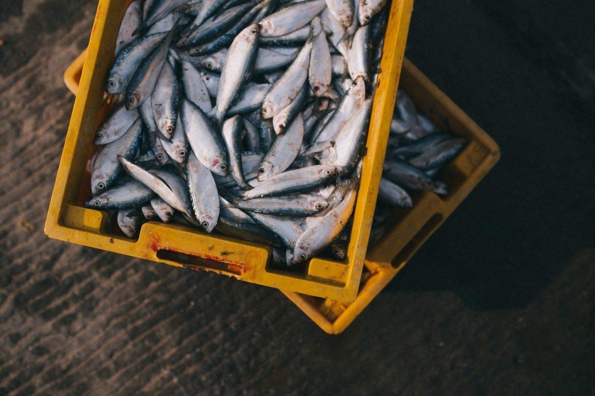 Pesca sportiva: quando e come si puo' esercitare