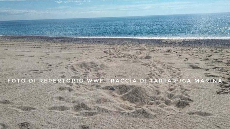 Nido di tartaruga marina scoperto dai volontari del WWF in Calabria