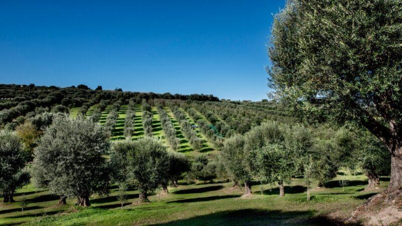 Frantoio Mafrica e slow food a Limbadi Calabria