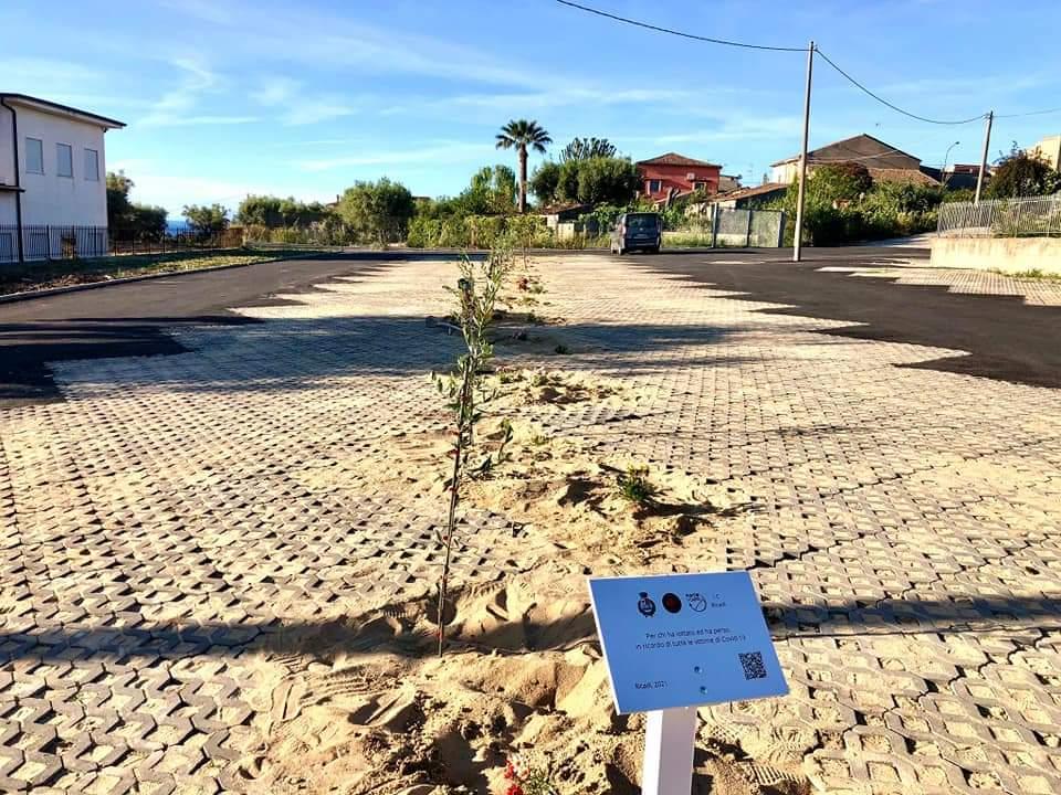 In memoria delle vittime del covid: piantati 15 ulivi al nuovo parcheggio del plesso scolastico di Orsigliadi