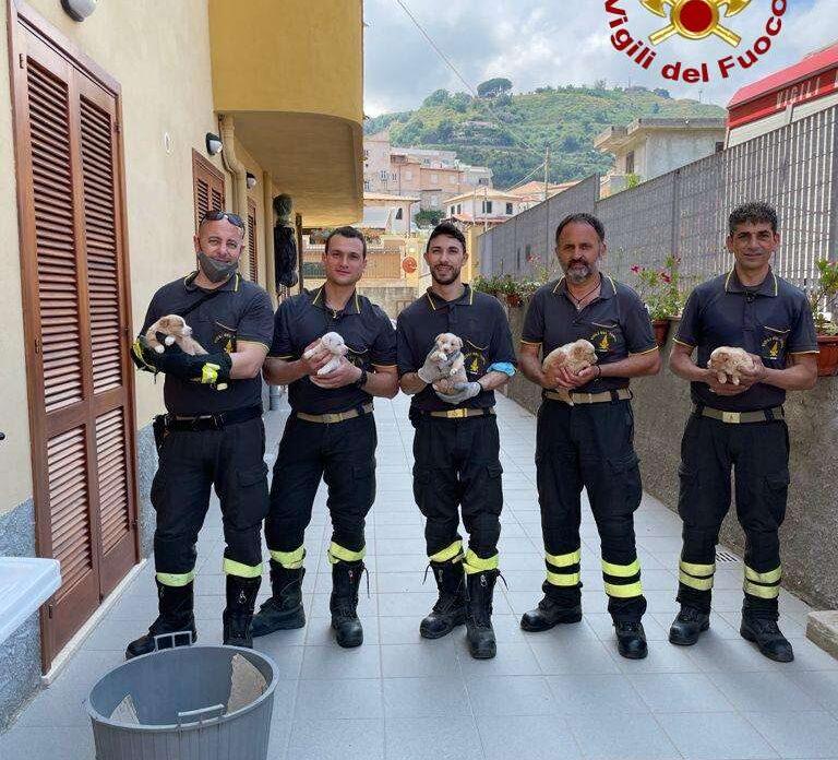 Tropea, salvati cuccioli dai vigili del fuoco. Erano finiti in una scarpata