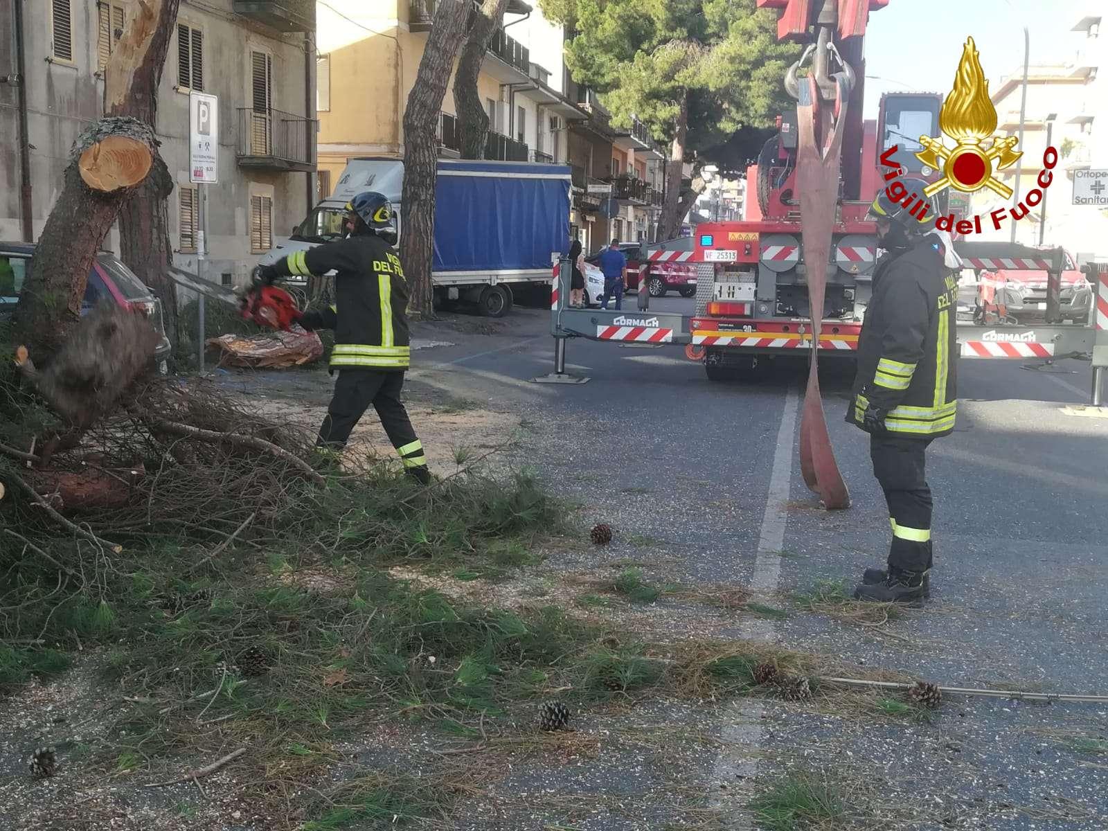 Vibo: caduta albero, tempestivo l'intervento dei vigili del fuoco