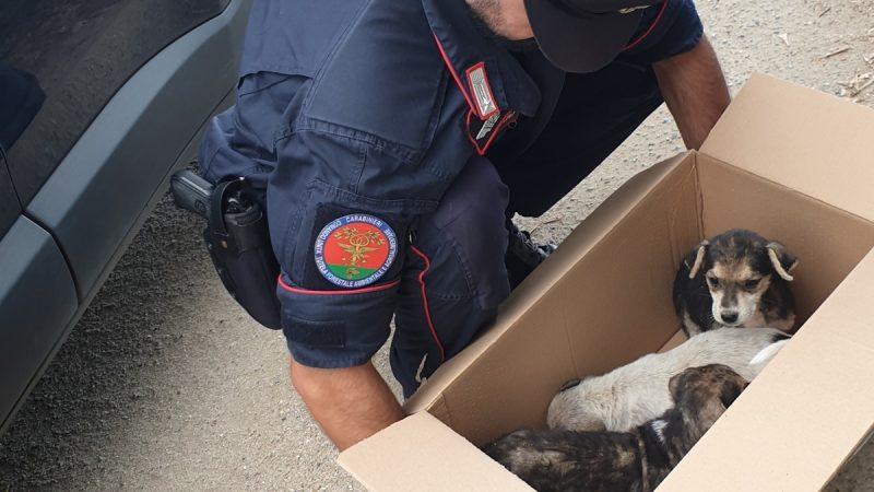 Monte Poro: salvati dai carabinieri forestali, 3 cagnolini abbandonati