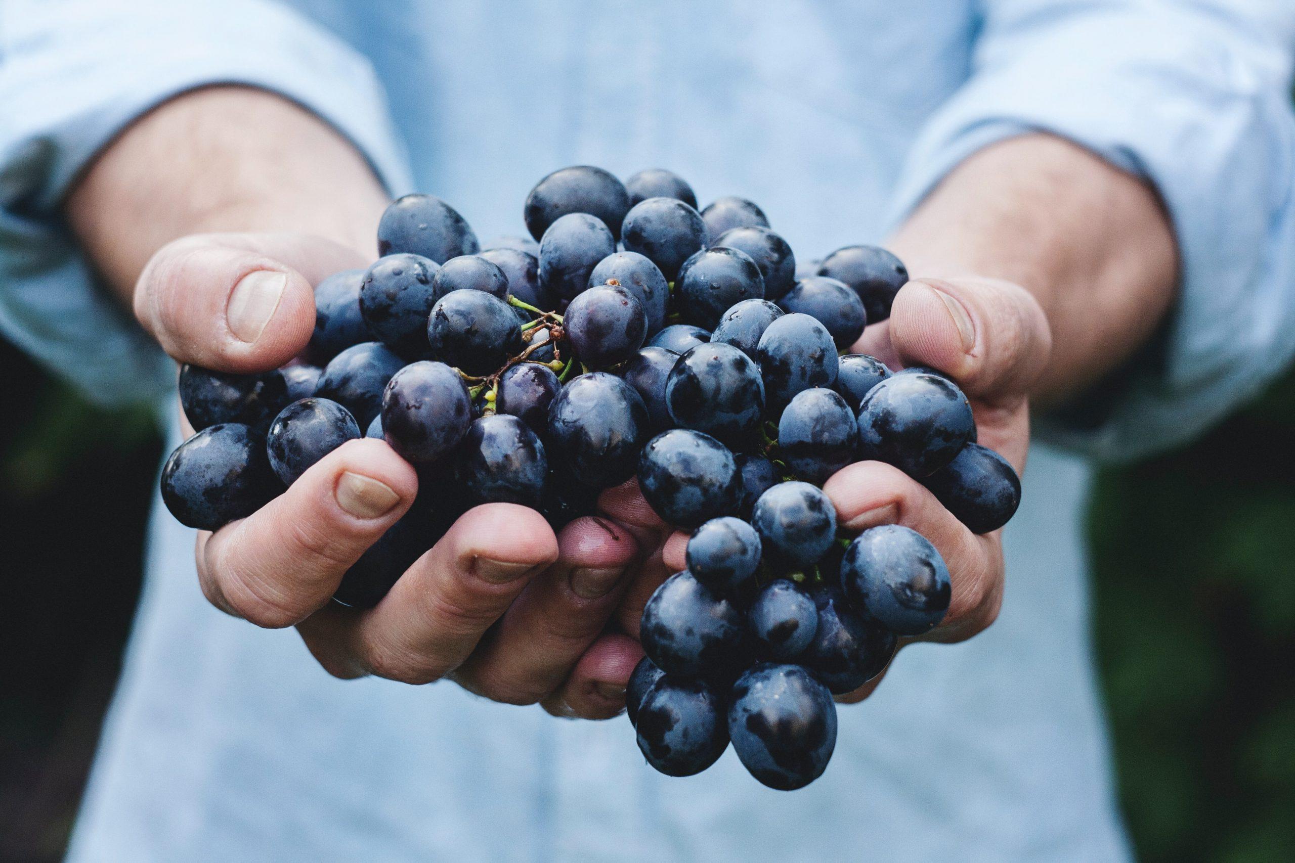 Vibo, Camera di Commercio: contributi in voucher per partecipare alla Milano Wine Week
